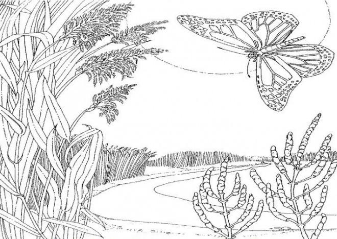 Coloriage et dessins gratuits Lac et Nature à imprimer