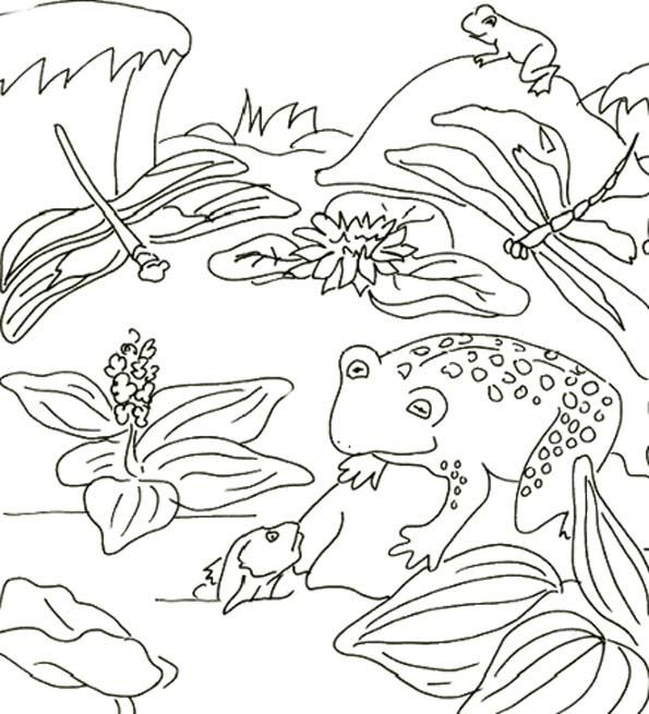 Coloriage et dessins gratuits Libellule 44 à imprimer