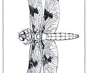 Coloriage Libellule 53