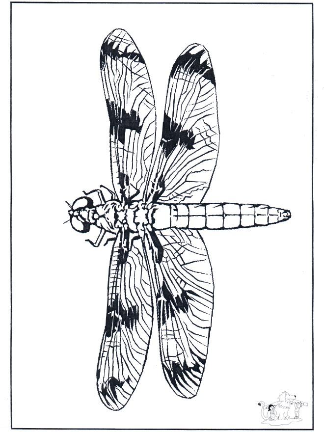 Coloriage et dessins gratuits Libellule 53 à imprimer