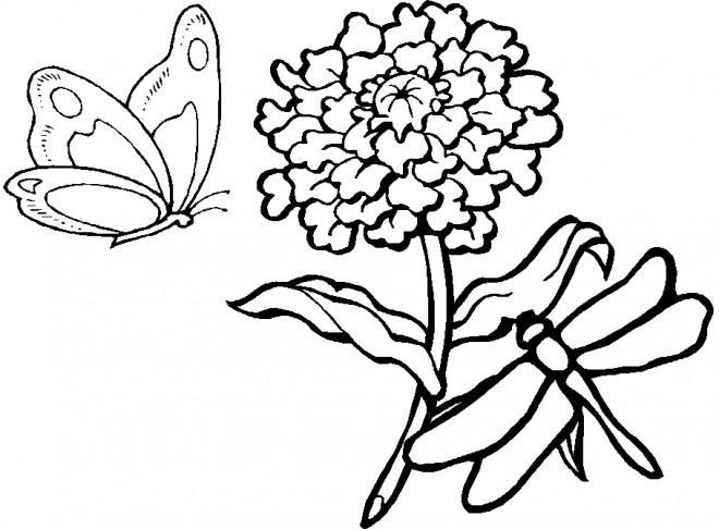 Coloriage et dessins gratuits Libellule 58 à imprimer