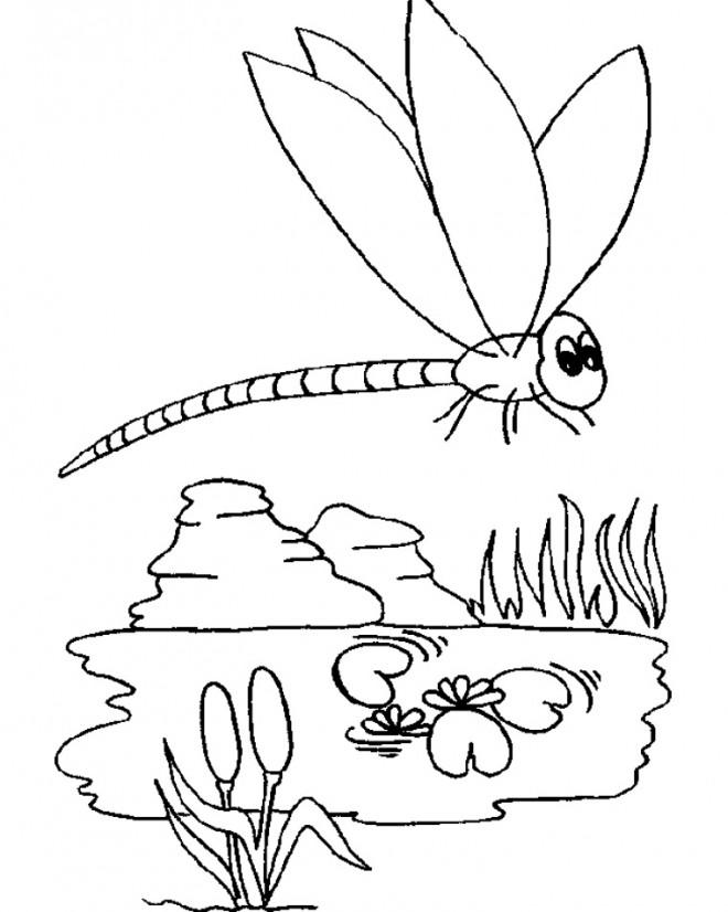 Coloriage et dessins gratuits Libellule 65 à imprimer