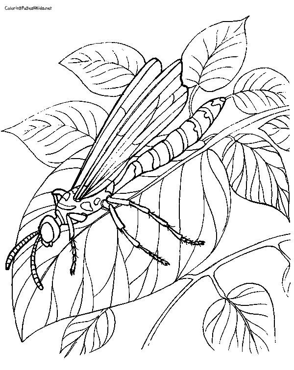 Coloriage et dessins gratuits Libellule 68 à imprimer