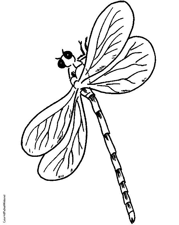 Coloriage et dessins gratuits Libellule 77 à imprimer