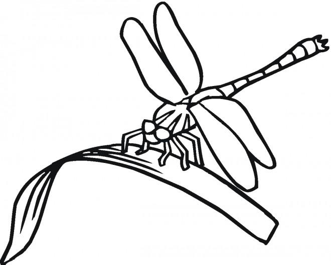Coloriage et dessins gratuits Libellule 8 à imprimer