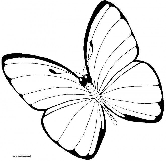 Coloriage et dessins gratuits Joli Papillon vecteur en noir à imprimer