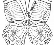 Coloriage dessin  Magnifique Papillon 5