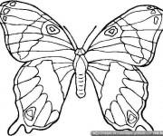 Coloriage et dessins gratuit Magnifique Papillon à colorier à imprimer