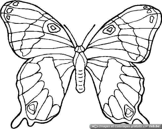Coloriage magnifique papillon colorier dessin gratuit imprimer - Coloriage magnifique ...