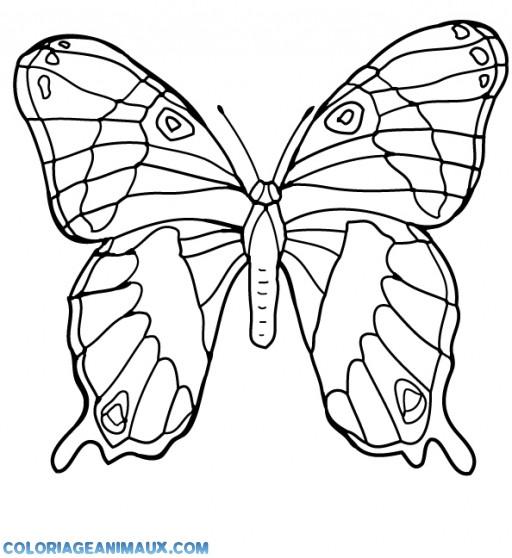 Coloriage magnifique papillon d couper - Coloriage magnifique ...