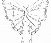 Coloriage Magnifique Papillon Insecte