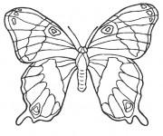 Coloriage Magnifique Papillon stylisé
