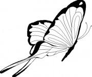Coloriage Magnifique Papillon vecteur