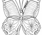 Coloriage Magnifique Papillon vue de face