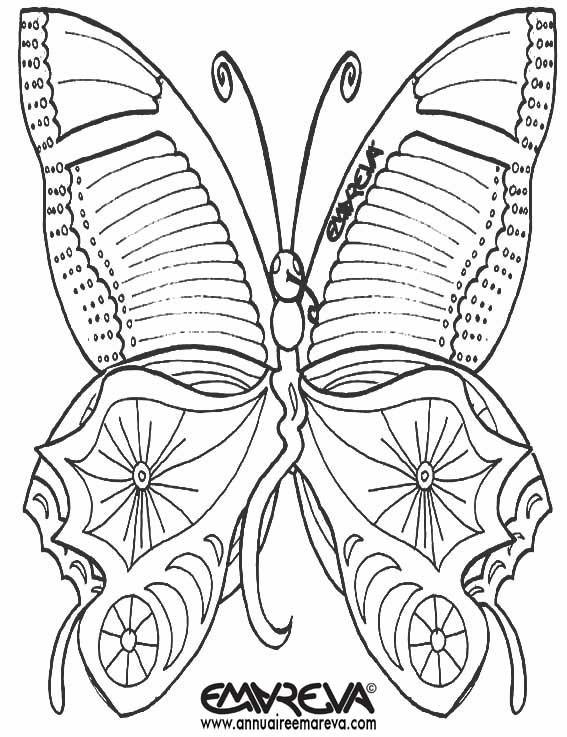 Coloriage et dessins gratuits Magnifique Papillon vue de face à imprimer