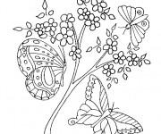 Coloriage Magnifiques Papillons sur Les Fleurs