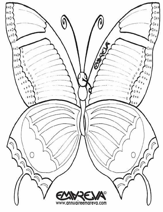 Coloriage et dessins gratuits Papillon qui ouvre ses ailes à imprimer