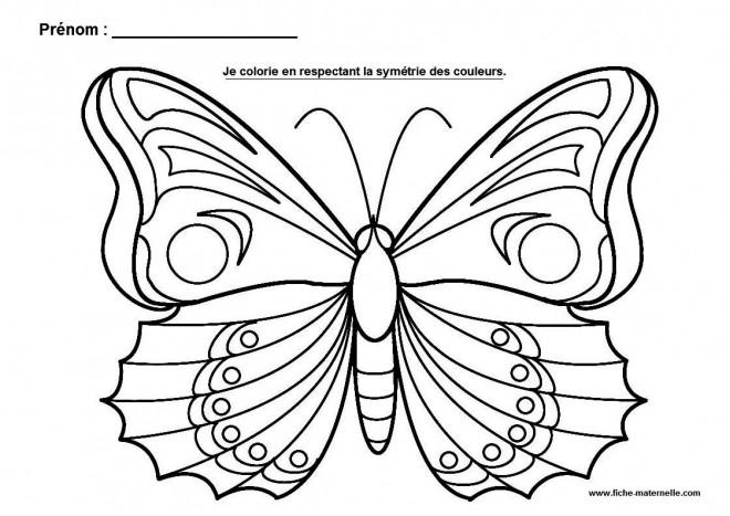 Coloriage et dessins gratuits Papillon splendide à imprimer