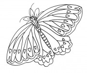 Coloriage Papillon superbe