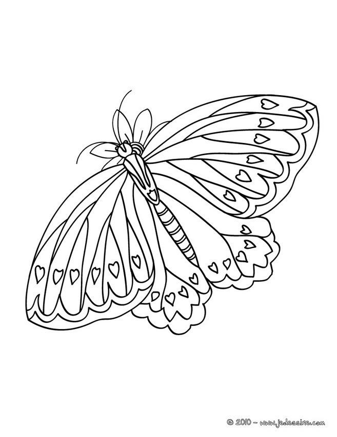 Coloriage et dessins gratuits Papillon superbe à imprimer