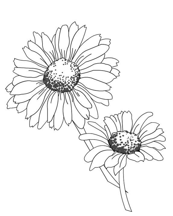 Coloriage et dessins gratuits Fleurs Marguerites couleur à imprimer