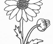 Coloriage dessin  Marguerite 3