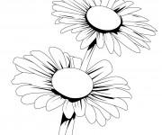 Coloriage dessin  Marguerite 5