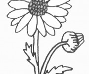 Coloriage Marguerite au crayon