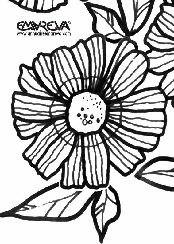 Coloriage et dessins gratuits Marguerite en printemps à imprimer