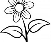 Coloriage et dessins gratuit Marguerite fleur à imprimer