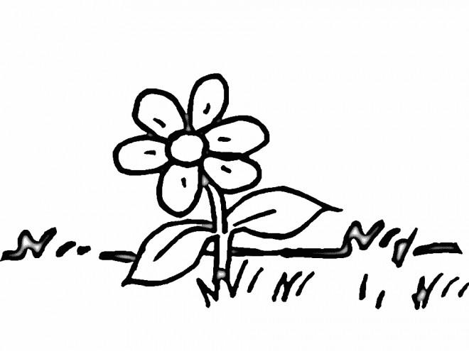 Coloriage et dessins gratuits Marguerite fleur  en noir à imprimer