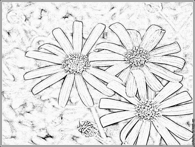 Coloriage et dessins gratuits Marguerite pétales à imprimer