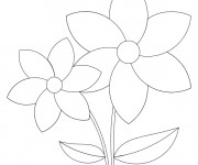 Coloriage Marguerite simple