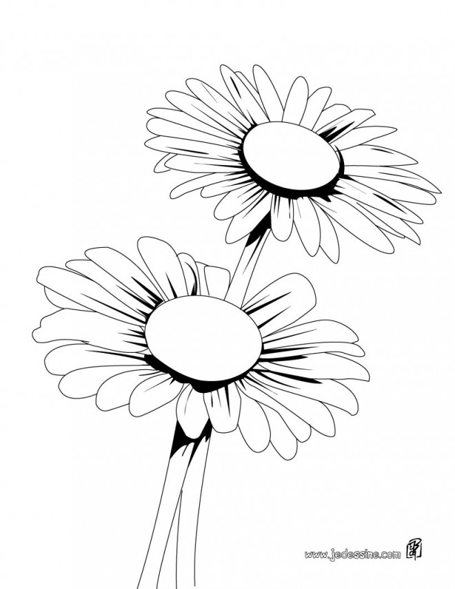 medium daisy flower coloring pages - photo#36