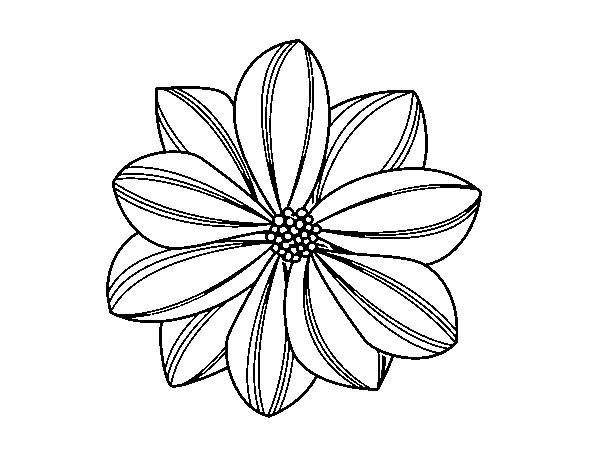 Coloriage et dessins gratuits Marguerite vue de face à imprimer
