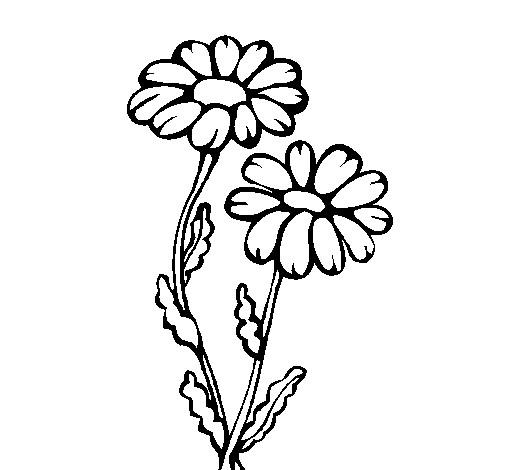 Coloriage et dessins gratuits Marguerites en hiver à imprimer