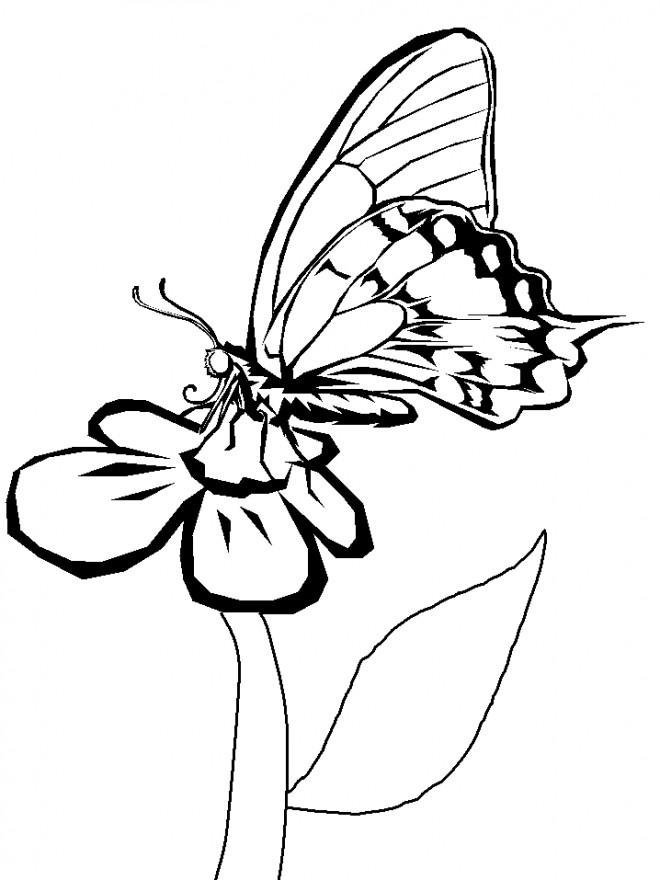 Coloriage et dessins gratuits Papillon sur Marguerite à imprimer