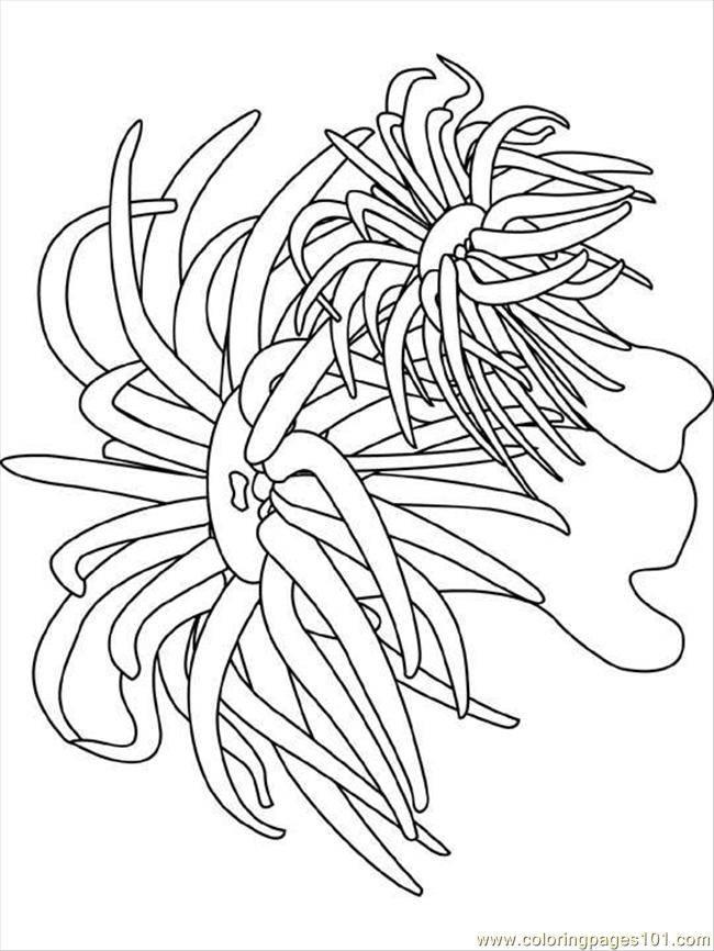 Coloriage et dessins gratuits algues de mer à colorier à imprimer