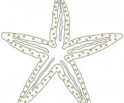 Coloriage et dessins gratuit Étoile de Mer à imprimer