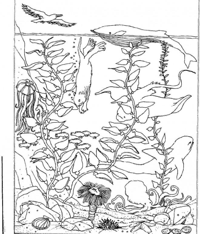 Coloriage et dessins gratuits Fond de mer et animaux à imprimer