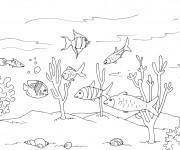 Coloriage Fond de Mer plein de vie