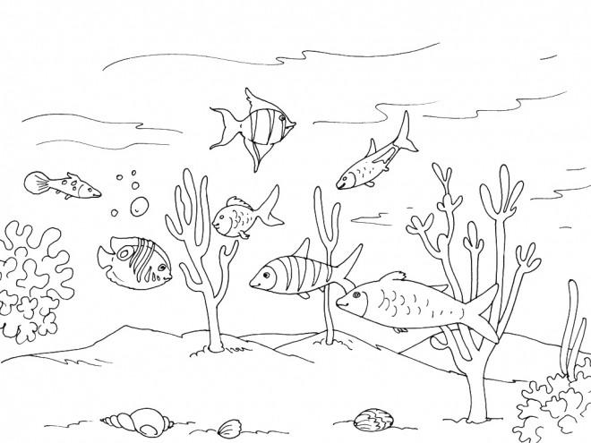 Coloriage et dessins gratuits Fond de Mer plein de vie à imprimer