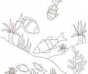 Coloriage dessin  Fond Marin 35