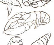 Coloriage Fruits de Mer stylisé
