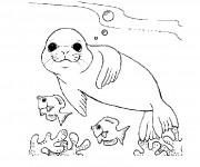 Coloriage dessin  Phoque 36