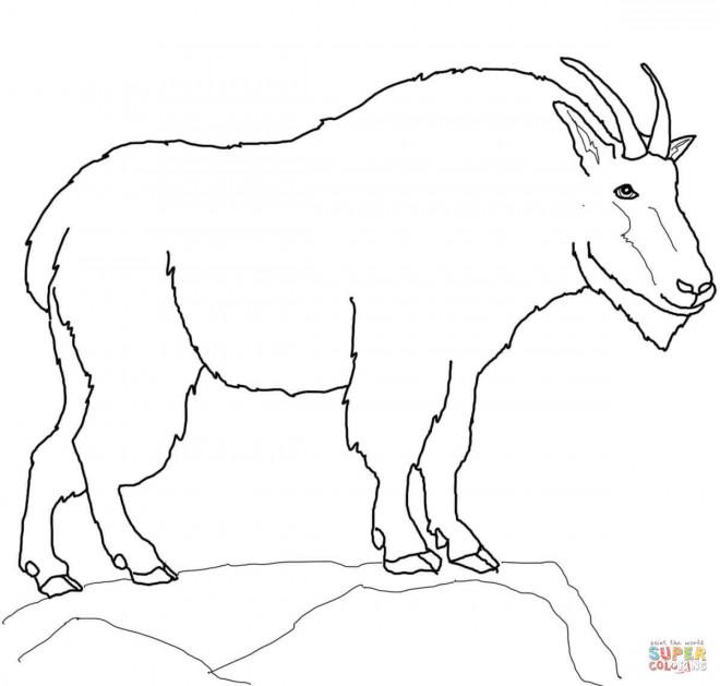 Coloriage et dessins gratuits Animal de Montagne à colorier à imprimer