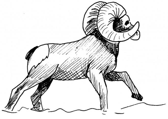 Coloriage et dessins gratuits Animaux de Montagne maternelle à imprimer