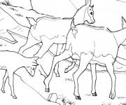 Coloriage et dessins gratuit Chèvres des montagnes à imprimer