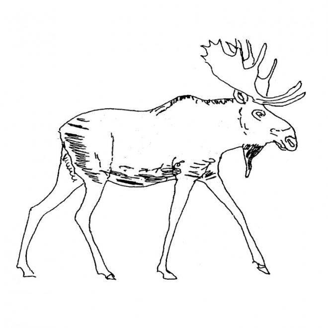 Coloriage et dessins gratuits Le Cerf facile à imprimer