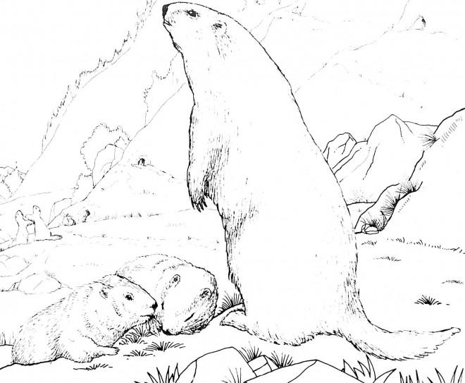 Coloriage et dessins gratuits Montagne et animaux à imprimer